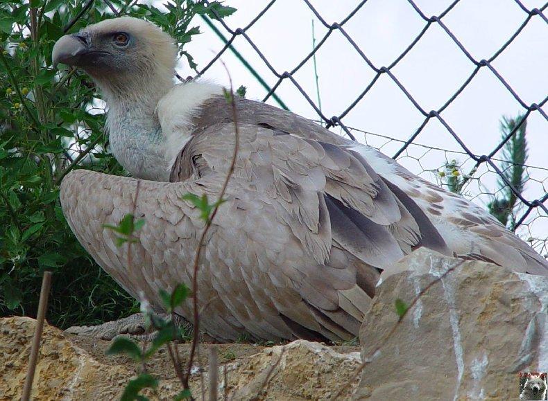 Quelques pensionnaires du Parc ornithologique des Dombes (01) 0038