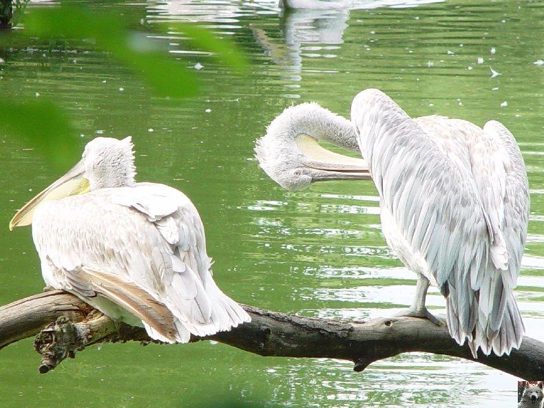 Quelques pensionnaires du Parc ornithologique des Dombes (01) 0054