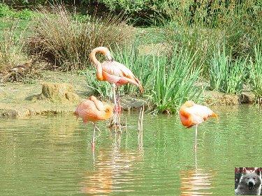 Quelques pensionnaires du Parc ornithologique des Dombes (01) 0058