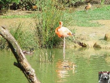 Quelques pensionnaires du Parc ornithologique des Dombes (01) 0059