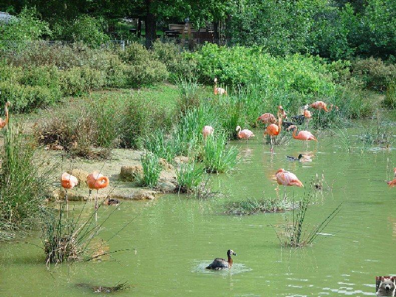 Quelques pensionnaires du Parc ornithologique des Dombes (01) 0060