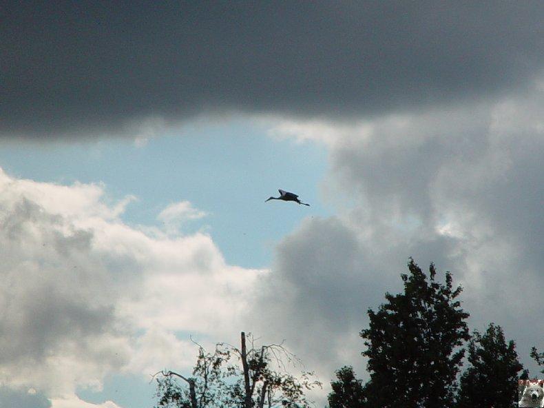 Quelques pensionnaires du Parc ornithologique des Dombes (01) 0063