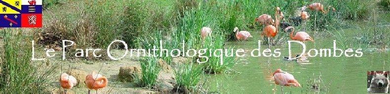 Quelques pensionnaires du Parc ornithologique des Dombes (01) Logo