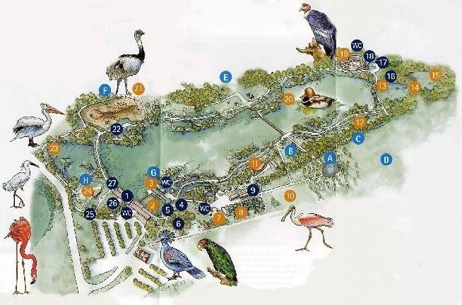 Quelques pensionnaires du Parc ornithologique des Dombes (01) Plan