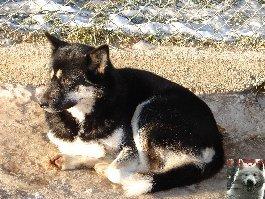 Le parc polaire de Chaux Neuve (25) 0015