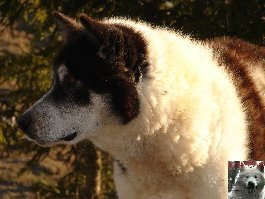 Le parc polaire de Chaux Neuve (25) 0020