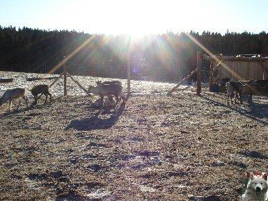 Le parc polaire de Chaux Neuve (25) 0025