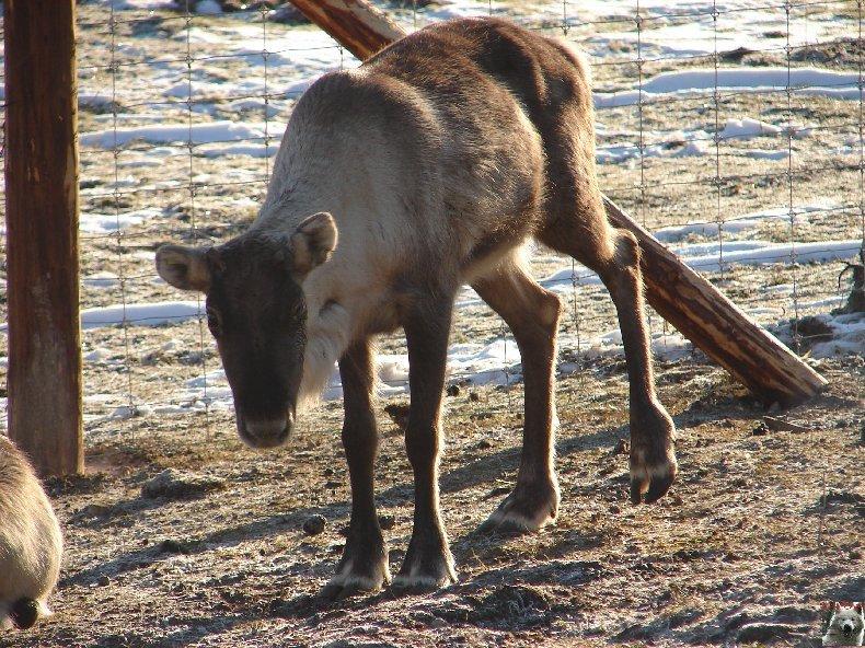 Le parc polaire de Chaux Neuve (25) 0026a