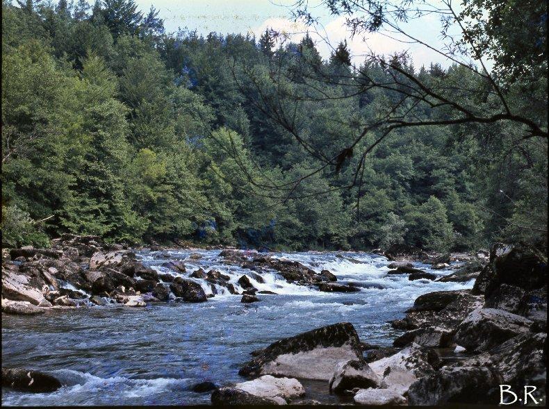 Le Ravin Mathieu, la Rivière d'Ain 0002