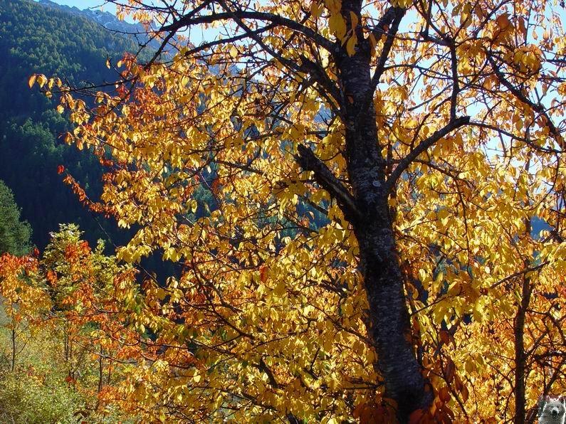 Le Val d'Annivier - Suisse - VS - 15 octobre 2005   0016
