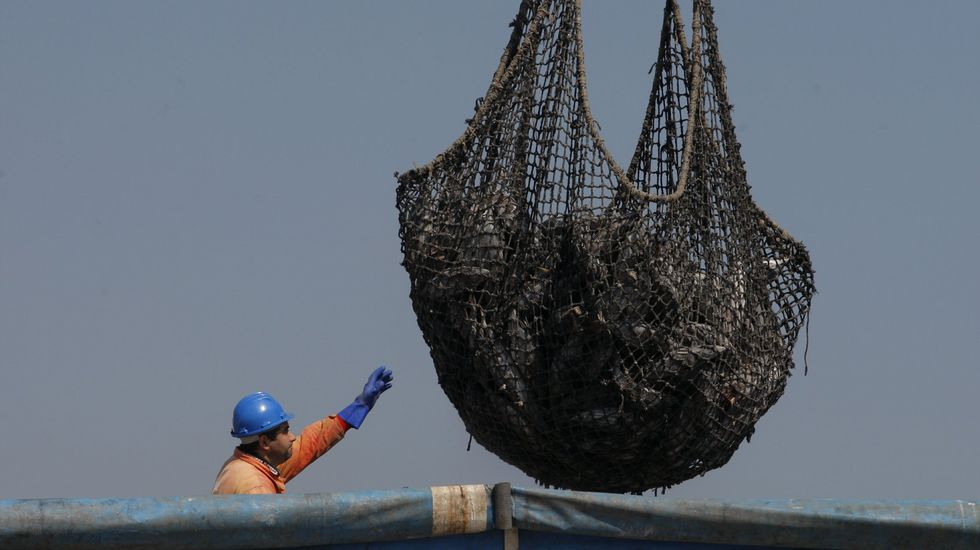 Pesca y sobreexplotación marítimo pesquera en el mundo, descartes, contradicciones, sectores, competencia intensa, Unión Europea. - Página 4 B16A4027