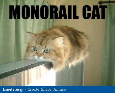 Caturday! Cat-meme-monorail