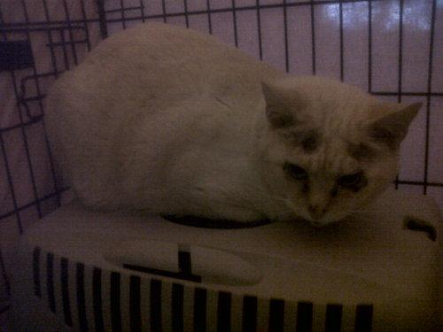 Nos positifs !! 45 amours de chats à adopter - Page 3 Bloggif_534312e438ca