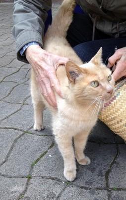 Les mamies et papis chats à l'adoption :) - Page 2 Img_1900