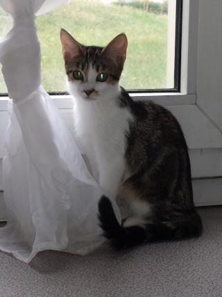 Nos positifs !! 45 amours de chats à adopter - Page 2 Ixiamajsite