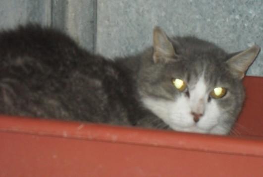 Les mamies et papis chats à l'adoption :) - Page 2 Lableumaj
