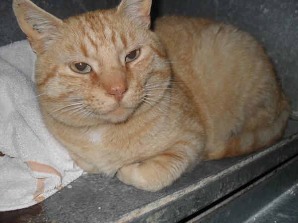 Nos positifs !! 45 amours de chats à adopter - Page 2 Mudlermaj