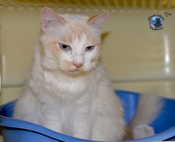 Les mamies et papis chats à l'adoption :) - Page 3 Neige2_light