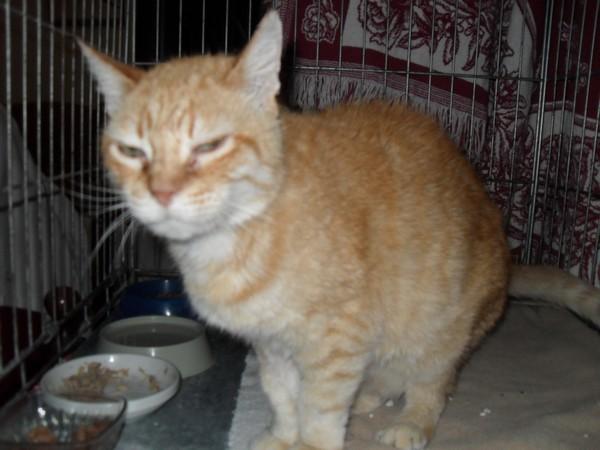 Nos positifs !! 45 amours de chats à adopter Sdc18500