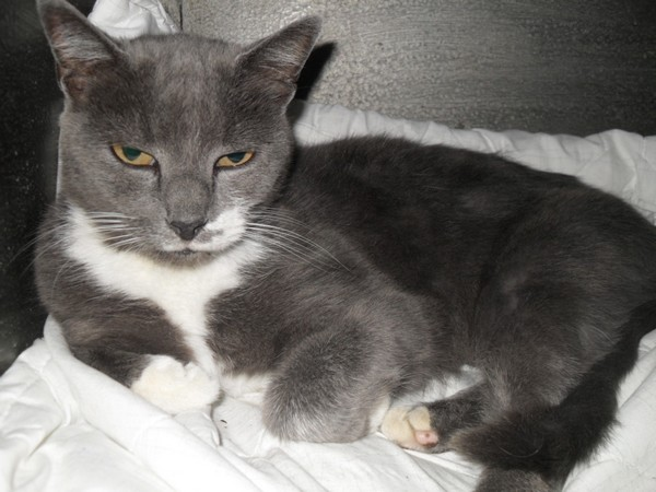 Nos positifs !! 45 amours de chats à adopter Sdc18544