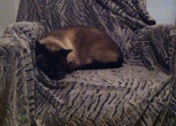 Nos positifs !! 45 amours de chats à adopter - Page 2 Stexuperymaj