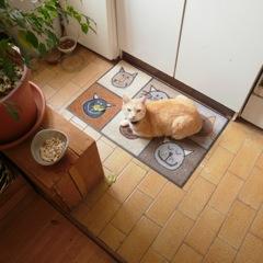 Les mamies et papis chats à l'adoption :) - Page 2 Zebulon1