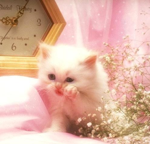 صور قطط روعه Cat