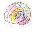 Le Mystère du Cerveau Cerveau2