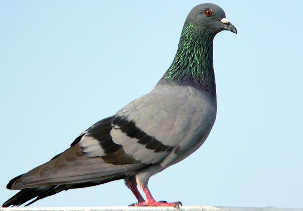 New 3DS LL Edition ZELDA Hyrule Edition Pigeon-le-jardin-des-animaux