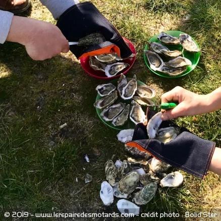 Sortie à l'Ile de Ré Torchon-huitre-armalith-bolidster-oyster