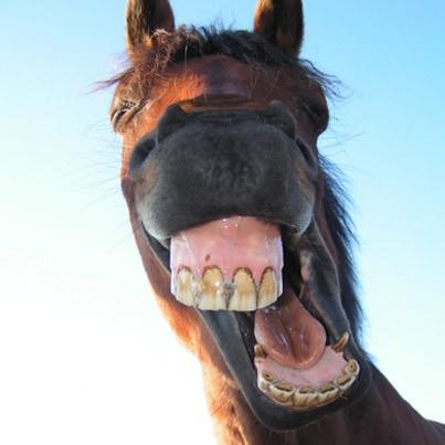 les chevaux.. 149833502