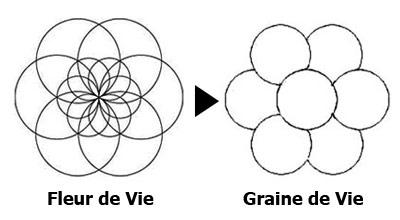 La Fleur de Vie Graine-de-vie-02