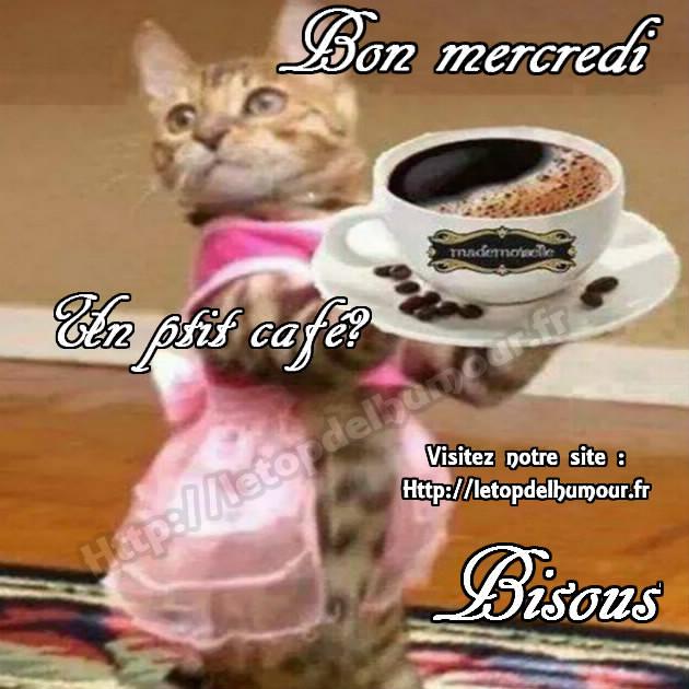 Mercredi 31 janvier Bon-mercredi-chat-rose-cafe