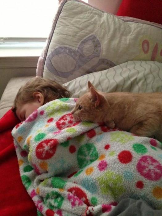 Les chats sont des êtres au grand coeur 00chat-or-525x700