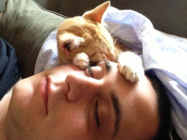 Les chats sont des êtres au grand coeur 02chat-or-600x450