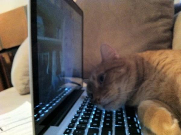 Les chats sont des êtres au grand coeur 06chat-or-600x448