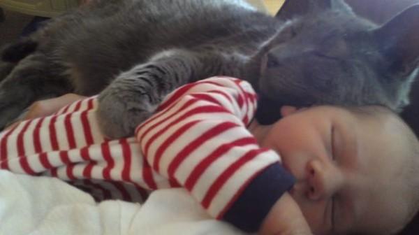 Les chats sont des êtres au grand coeur 08chat-or-600x336