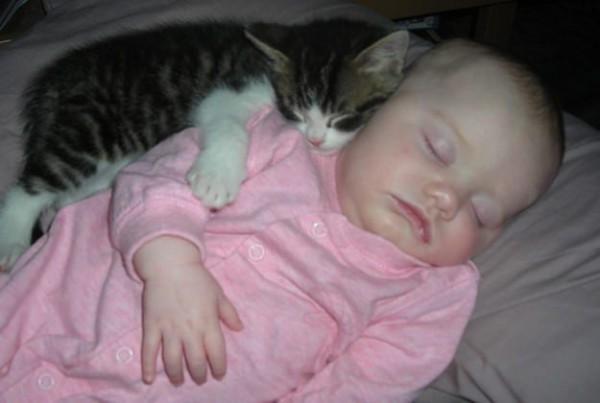Les chats sont des êtres au grand coeur 10chat-or1-600x403