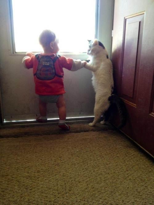 Les chats sont des êtres au grand coeur 16chat-or