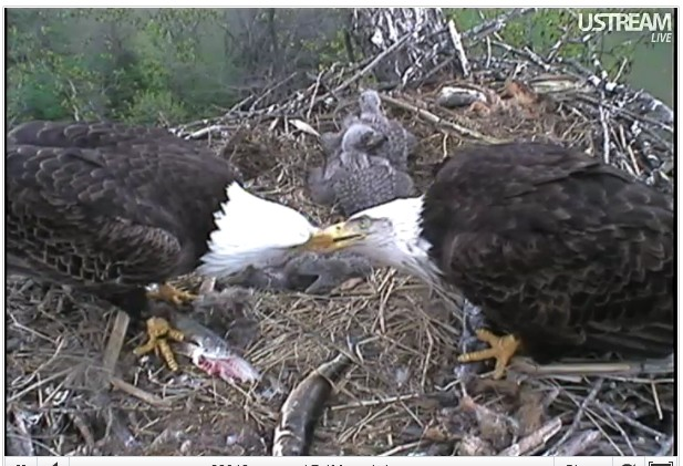 Eagles on live !!! - Page 3 2012_4_15__1