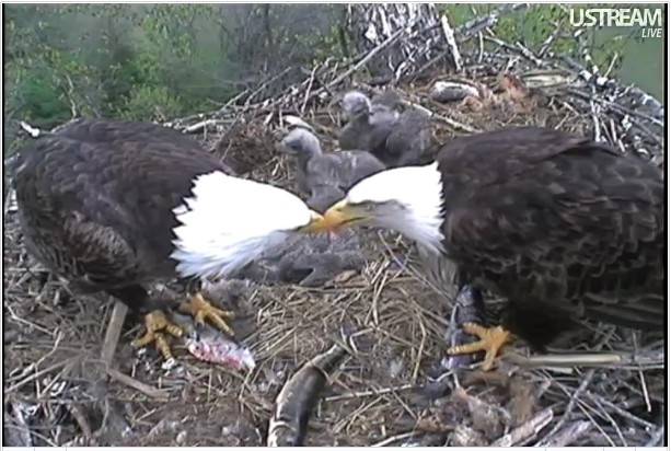 Eagles on live !!! - Page 3 2012_4_15__2