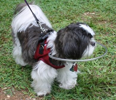 Dispositif pour chien aveugle ou malvoyant Halo