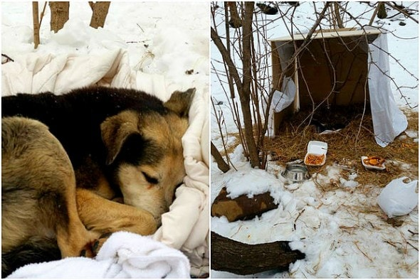 Woman Sleeps in Freezing NYC Park to Save Feral Dog 2.19.15-Woman-Sleeps-in-NYC-Park-to-Save-Senior-Feral-Dog4-590x394