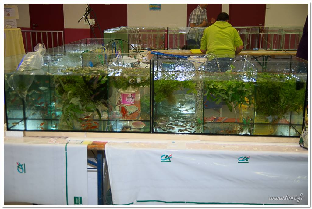 Bourse aquariophile Nantaise le 27 octobre 2013, photos Bourse%20aqua44%202013%2030