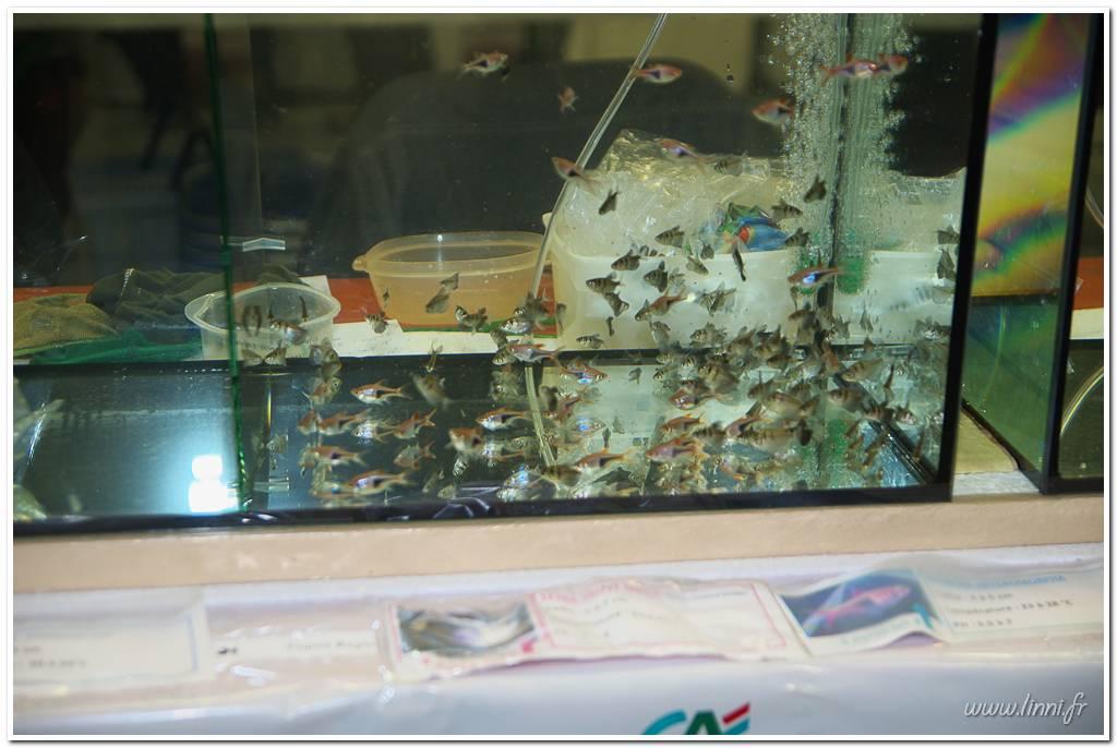 Bourse aquariophile Nantaise le 27 octobre 2013, photos Bourse%20aqua44%202013%2031