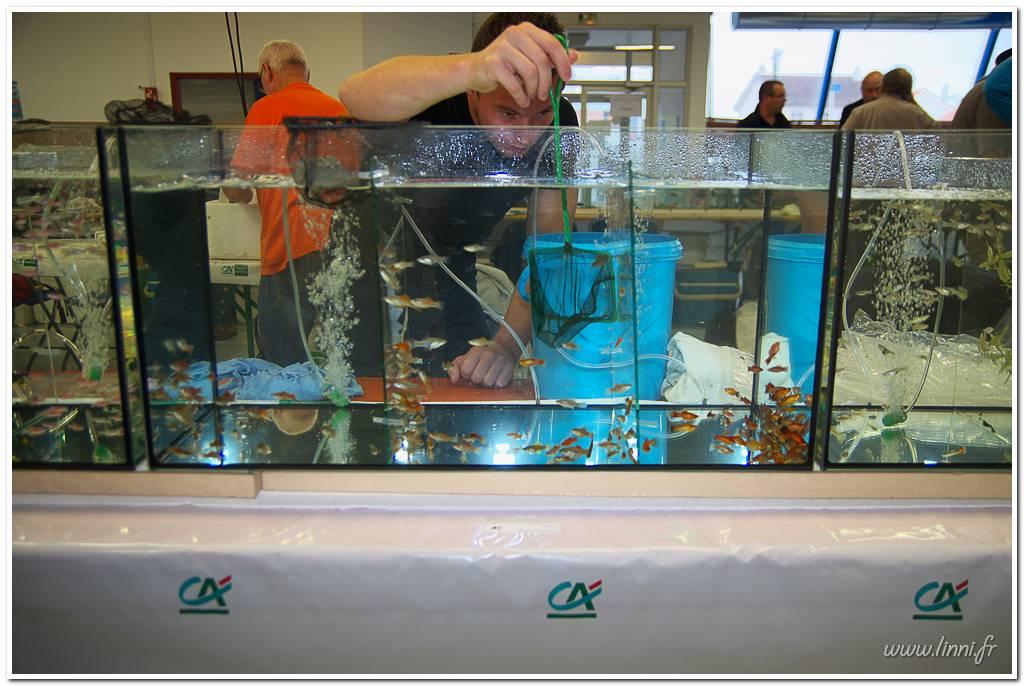 Bourse aquariophile Nantaise le 27 octobre 2013, photos Bourse%20aqua44%202013%2032