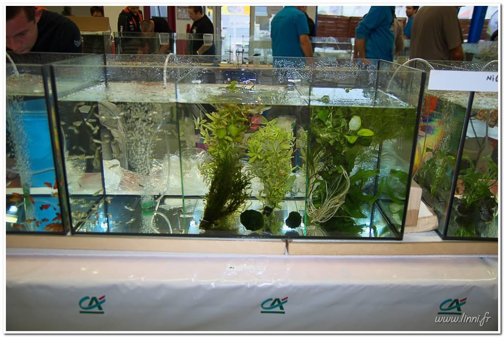 Bourse aquariophile Nantaise le 27 octobre 2013, photos Bourse%20aqua44%202013%2033