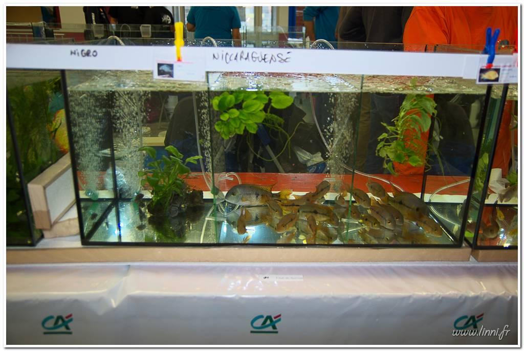 Bourse aquariophile Nantaise le 27 octobre 2013, photos Bourse%20aqua44%202013%2034