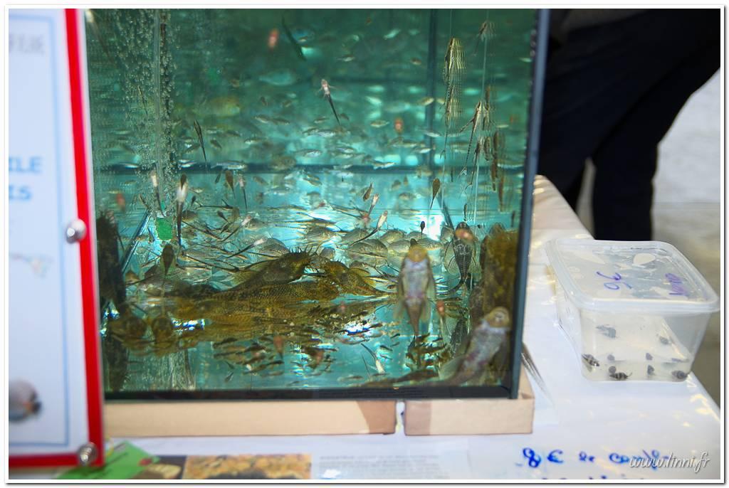 Bourse aquariophile Nantaise le 27 octobre 2013, photos Bourse%20aqua44%202013%2035