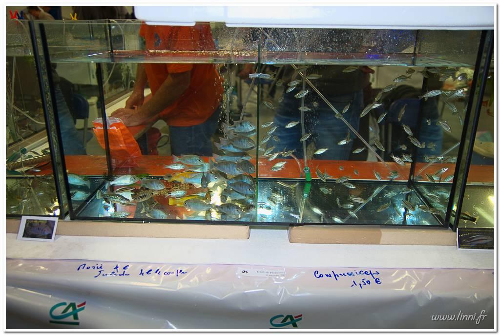 Bourse aquariophile Nantaise le 27 octobre 2013, photos Bourse%20aqua44%202013%2036